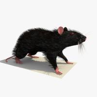 3d black mouse rat standing