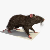 brown mouse rat standing 3d c4d
