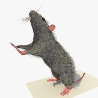 3dsmax grey mouse rat standing