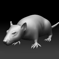 Sculpted Rat