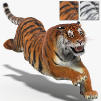 tigers fur cat animation 3d 3ds