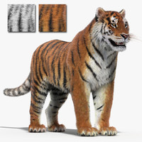 tigers fur modeled 3d model