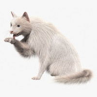 turkish angora white cat 3d model
