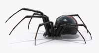 black widow spider 3d max