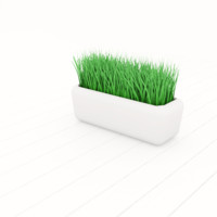 Grass in Cup