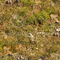 Mossy ground 23