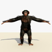 3d model of chimpanzee fur chimp