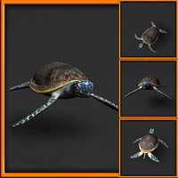 maya sea turtle rigged