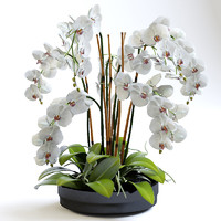 realistic orchids 3d model