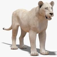 Lioness White (Lite)
