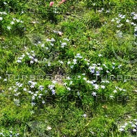 Grass and flowers 4