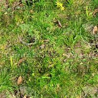 Grass and weeds 7