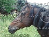 97 photos of horse