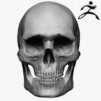 3ds caucasoid male skull zbrush