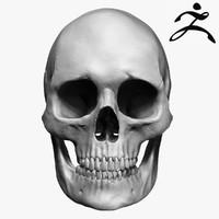 3ds max caucasoid female skull zbrush