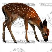Deer Animal (PSD-Cutout)