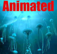 jelly fish animation 3d ma