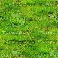 Grass 26