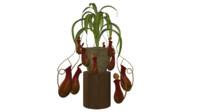 carnivorous plants insectivorous obj
