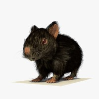 black hamster fur 3d 3ds