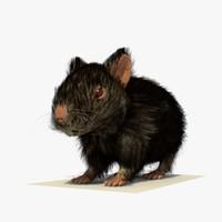 Black Hamster with FUR