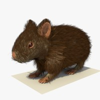 3d 3ds brown hamster fur