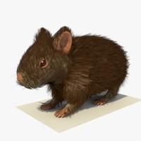 3d 3ds brown hamster fur