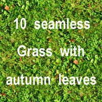 Grass With Autumn Leaves Collection 3