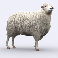 - sheep 3d model