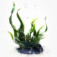 seaweeds animation max