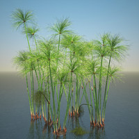 cyperus papyrus set 3d model