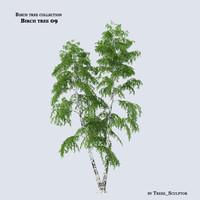 birch tree max