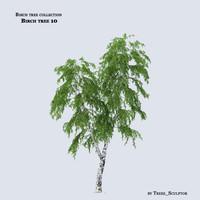 max birch tree