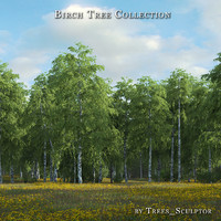 hi-poly birches tree 3d max