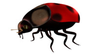 beetles spots 3d model