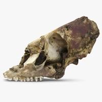 3d model dead dog skull