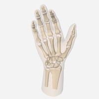 3ds max bones wrist hand