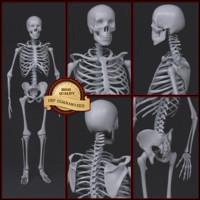 skeleton human man max