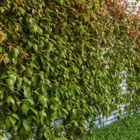3ds max set virginia creeper