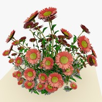3d pink daisy flowers model