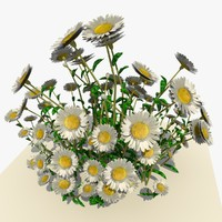 3d white daisy flowers model