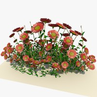 pink daisy flowers 3d 3ds