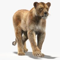 3d lioness fur cat animation