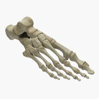 foot skeleton max