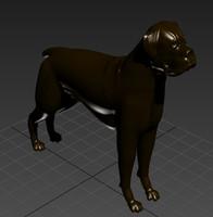 Dog N190213