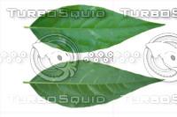 Leaf set 002