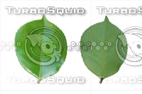 Leaf set 003