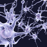 3d model neurons