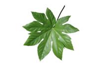 Leaf set 008