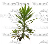 Plant set 001